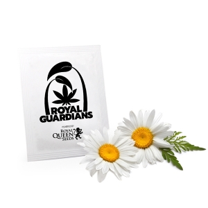 Chamomile Royal Guardians