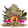 HulkBerry Bulk Seeds