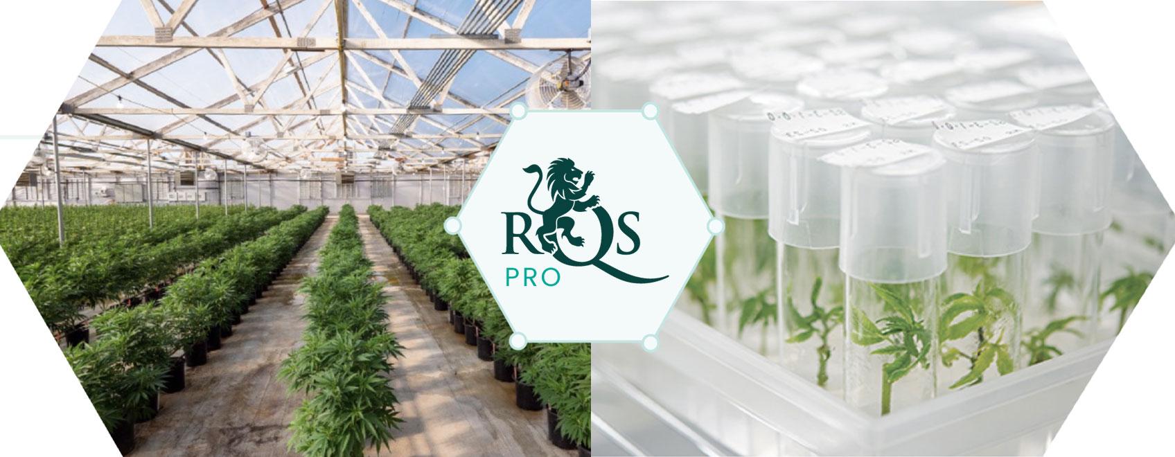 RQS Pro: Πρωτοπόρος Στην Καινοτομία Και Την Έρευνα Στον Τομέα Της Κάνναβης