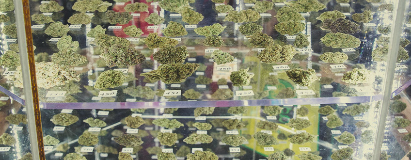 Ποικιλίες Κάνναβης της RQS που Κέρδισαν Cannabis Cup