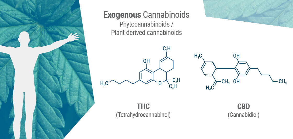 Exogenous Cannabinoids or Phytocannabinoids