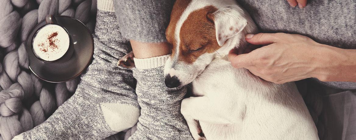 Τι να κανετε εαν ο σκυλος σας καταναλωσει κανναβη;